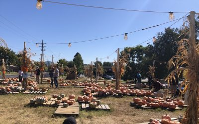 Shortage of Pumpkins Today- Sunday, October 13th